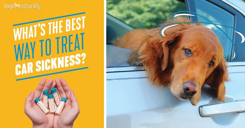 GoPatch for car sick dogs